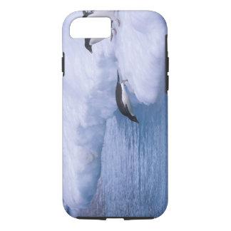 Coque iPhone 8/7 L'Antarctique, île de Paulet. Piqué de pingouins