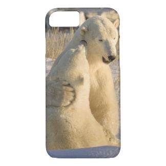 Coque iPhone 8/7 Le Canada, Manitoba, baie de Hudson, Churchill.