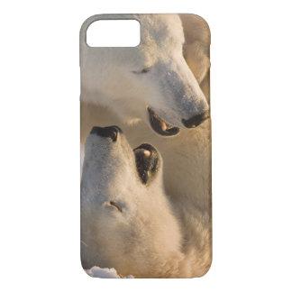 Coque iPhone 8/7 Le Canada, Manitoba, baie de Hudson, Churchill. 4