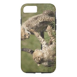 Coque iPhone 8/7 Le guépard, jubatus d'Acinonyx, met bas le jeu