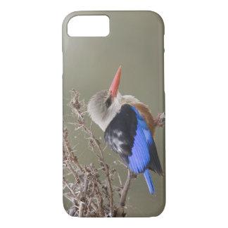 Coque iPhone 8/7 Le Kenya. Plan rapproché de martin-pêcheur