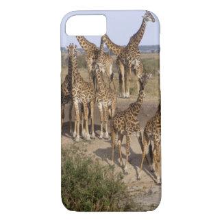 Coque iPhone 8/7 Le Kenya : Troupeau de réservation de jeu de Mara