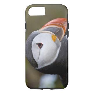 Coque iPhone 8/7 Le macareux atlantique, un oiseau marin pélagique,