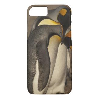 Coque iPhone 8/7 Le Roi pingouins (patagonica d'Aptenodytes P.)