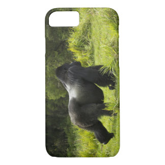 Coque iPhone 8/7 Le Rwanda, parc national de volcans. Montagne 2