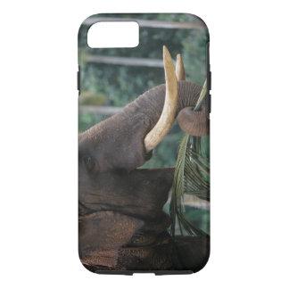Coque iPhone 8/7 Le Sri Lanka, éléphant alimente à l'éléphant 2 de