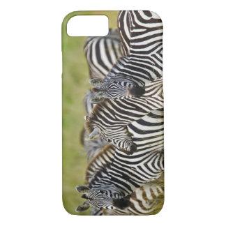 Coque iPhone 8/7 Le zèbre de Burchelli, burchellii d'Equus, masai