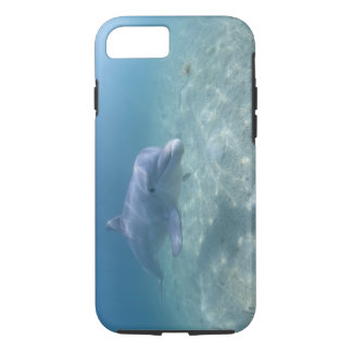Coque iPhone 8/7 Les Bahamas, île de Bahama grande, port franc,