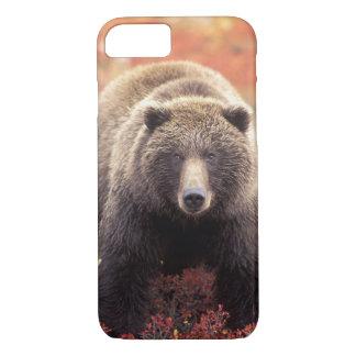 Coque iPhone 8/7 Les Etats-Unis, Alaska, Denali NP, ours gris