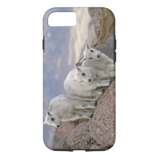 Coque iPhone 8/7 Les Etats-Unis, le Colorado, Mt. Evans. Chèvre de