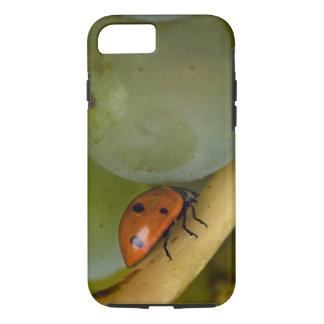 Coque iPhone 8/7 Les Etats-Unis, Orégon, amitié. Insecte de Madame