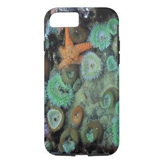 Coque iPhone 8/7 Les Etats-Unis, Orégon, ESPÈCES de Nepture. Une
