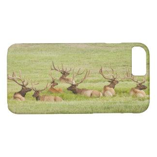 Coque iPhone 8/7 Les Etats-Unis, Utah, groupe d'élans de taureau