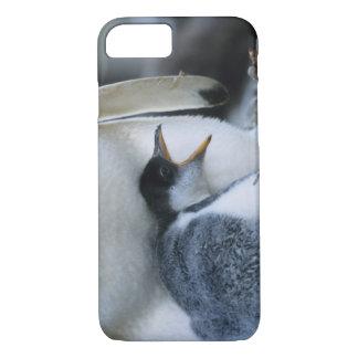 Coque iPhone 8/7 Les Îles Falkland. Poussin de pingouin de Gentoo à