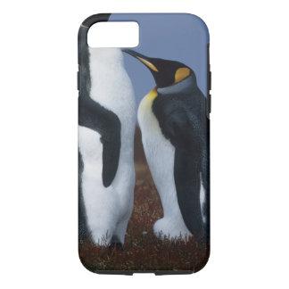 Coque iPhone 8/7 Les Îles Falkland. Support de deux pingouins de