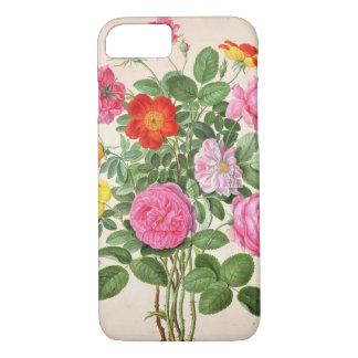 Coque iPhone 8/7 Les roses, plaquent 4 du Florilegium de Nassau (la