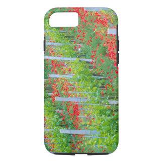 Coque iPhone 8/7 L'Europe, Italie, Toscane. Pavots rouges colorés