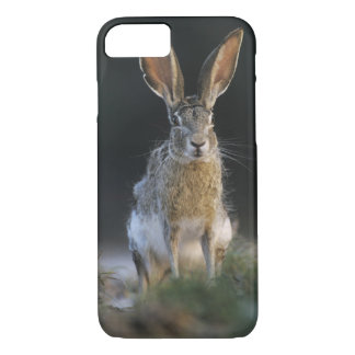 Coque iPhone 8/7 Lièvre à queue noire, californicus de Lepus, 2