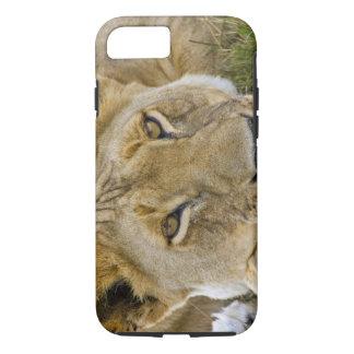 Coque iPhone 8/7 Lion dans la brosse, se reposant dans la chaleur