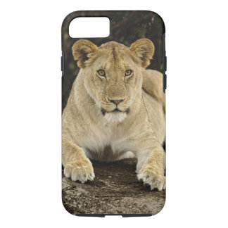 Coque iPhone 8/7 Lion, Panthera Lion, parc national de Serengeti,