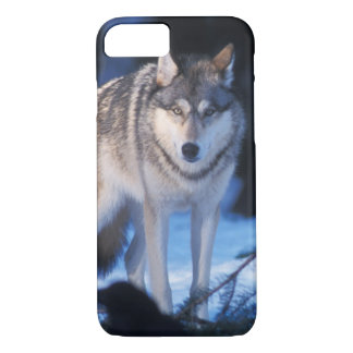 Coque iPhone 8/7 loup gris, lupus de Canis, dans les collines des 3