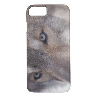 Coque iPhone 8/7 loup gris, lupus de Canis, dans les collines du