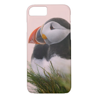Coque iPhone 8/7 Macareux atlantique (arctica de Fratercula) 6