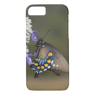 Coque iPhone 8/7 Machaon de Pipevine, philenor de Battus, adulte