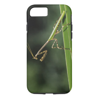 Coque iPhone 8/7 Mantid, Mantidae, adulte sur la fronde de paume,