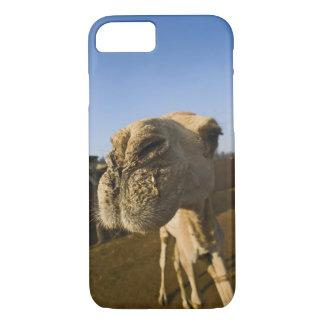 Coque iPhone 8/7 Marché de chameau, le Caire, Egypte
