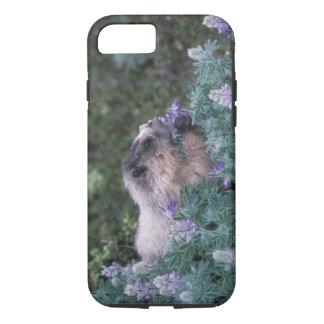 Coque iPhone 8/7 Marmotte blanchie alimentant sur de loup soyeux,