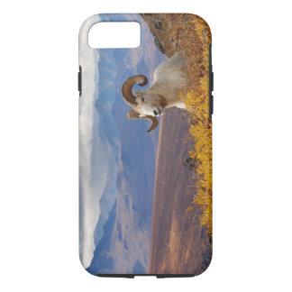 Coque iPhone 8/7 moutons de dall, dalli d'Ovis, RAM se reposant sur