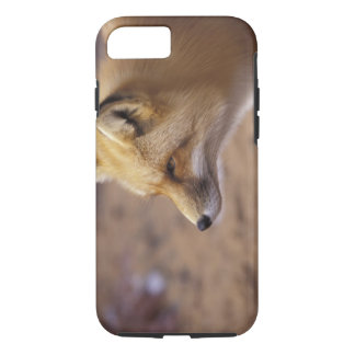 Coque iPhone 8/7 Na, Canada. Fox rouge