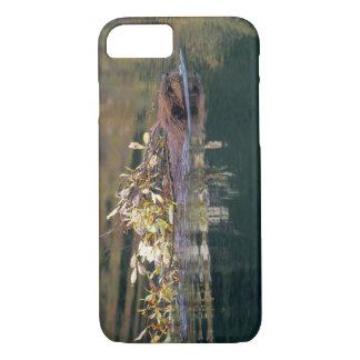 Coque iPhone 8/7 Na, Etats-Unis, Alaska, Denali NP, rassemblement