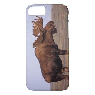 Coque iPhone 8/7 orignaux, alces d'Alces, taureau avec de grands