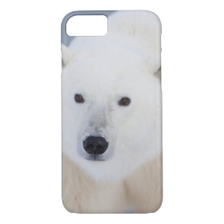 Coque iPhone 8/7 Ours blanc