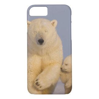 Coque iPhone 8/7 ours blanc, maritimus d'Ursus, truie avec 3