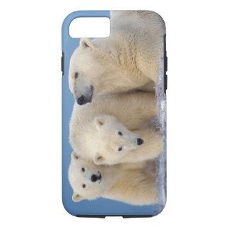 Coque iPhone 8/7 ours blanc, maritimus d'Ursus, truie avec des