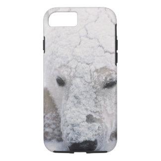 Coque iPhone 8/7 Ours blanc, Urus Maritimus, Arctique, Churchill,