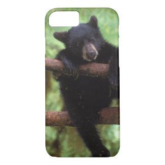 Coque iPhone 8/7 ours noir, Ursus américanus, petit animal dans un