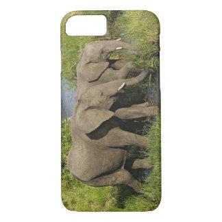Coque iPhone 8/7 Paires d'éléphants africains alimentant, masais