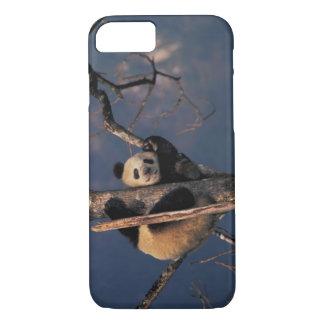 Coque iPhone 8/7 Panda de bébé jouant sur l'arbre, Wolong, Sichuan