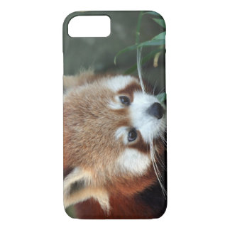Coque iPhone 8/7 Panda rouge, zoo de Taronga, Sydney, Australie