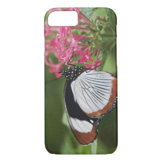 Coque iPhone 8/7 Papillon d'Afrique