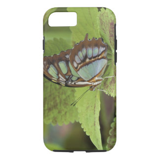 Coque iPhone 8/7 Papillon de malachite (stelenes de Metamorpha)