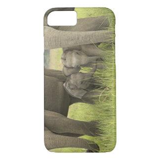 Coque iPhone 8/7 Parc national de Corbett, Uttaranchal, Inde