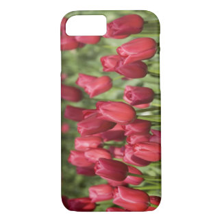 Coque iPhone 8/7 Pays-Bas (aka Hollande), Lisse. Keukenhof 4