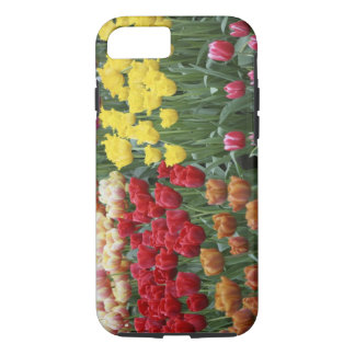 Coque iPhone 8/7 Pays-Bas, jardins de Keukenhoff, tulipes