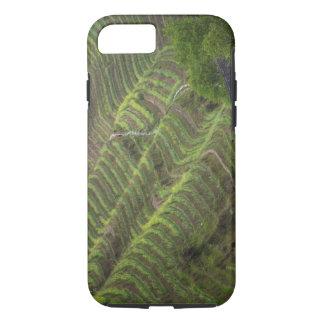 Coque iPhone 8/7 Paysage des terrasses de riz dans la montagne,