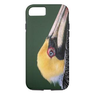 Coque iPhone 8/7 Pélican masculin de Brown (occidentalis de